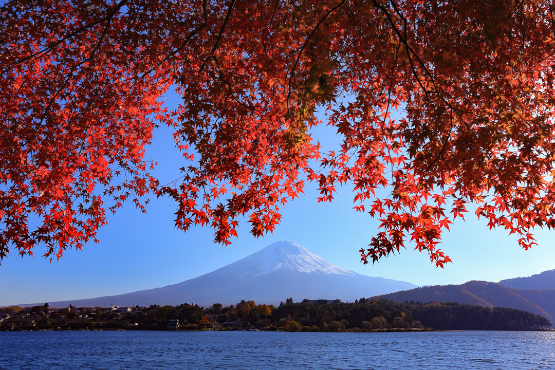 Autumn leaves and Mount Fuji