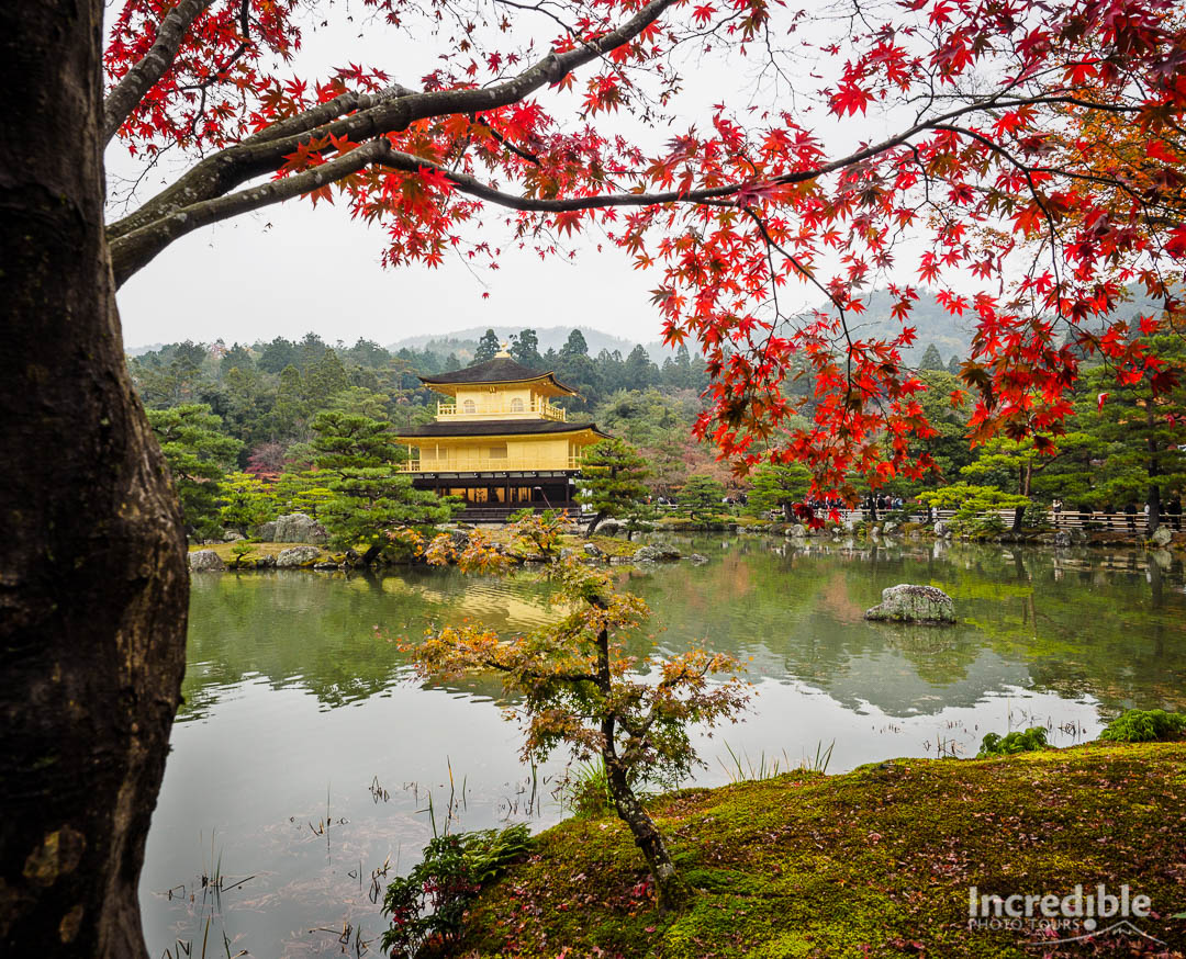 Autumn colours at Kinkakuji (金閣寺)
